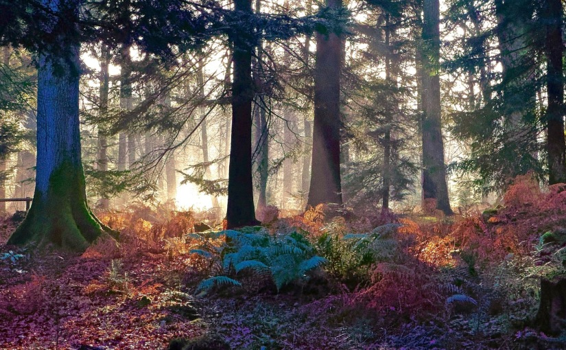A Woodland Morning