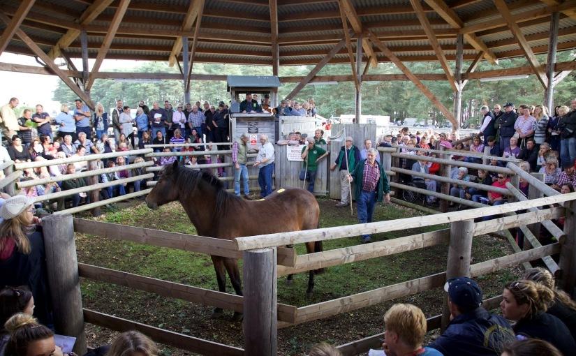 Ponysales