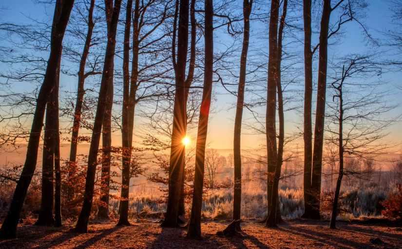 Sunrise Through WinterTrees