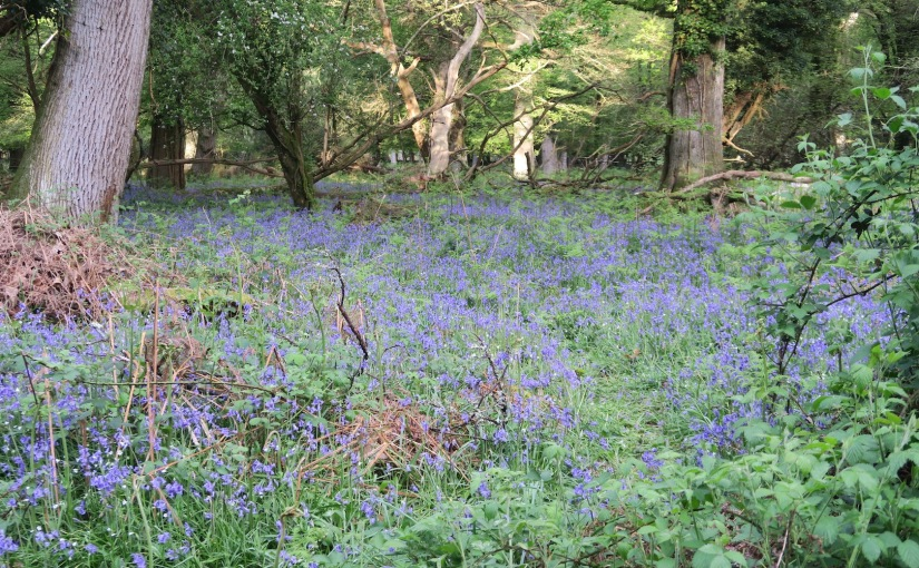 In a BluebellWood